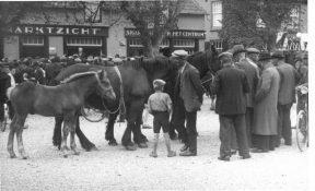 Paardenmarkt Wijchen - Wijchen=